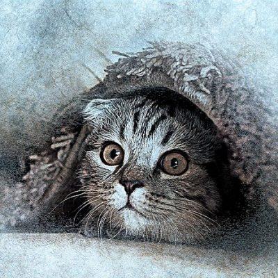 Cat Pet Art Abstract Vintage Animal Kitty